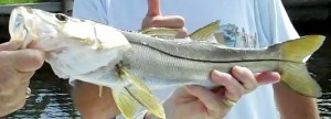 Snook Fishing Baits