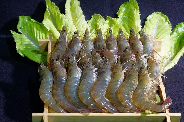 live shrimp bait
